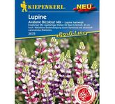 Lupine 'Avalune Bicolour Mix'