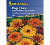 Ringelblumen 'Touch of Red Mix'
